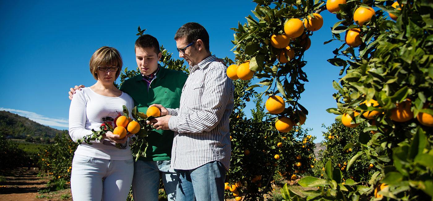 familia-naranjas-marisa-3