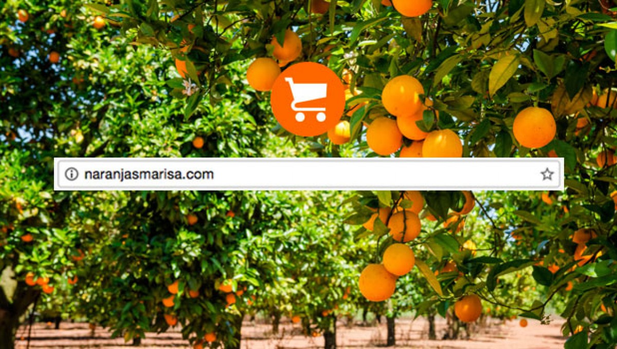 Porqué comprar naranjas por internet