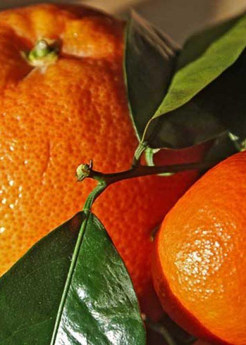 Caja mixta naranjas zumo-clementinas 15kg.