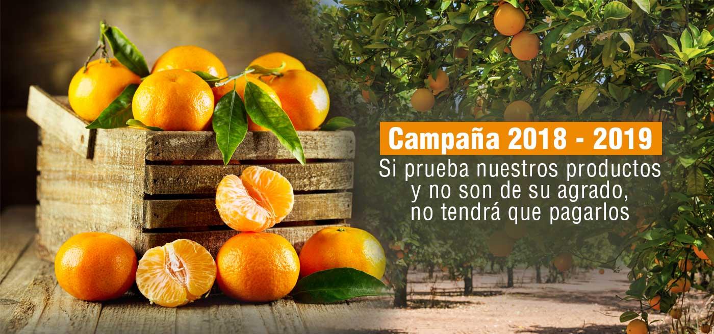 naranjas-marisa-camapana-18-19-naranjas