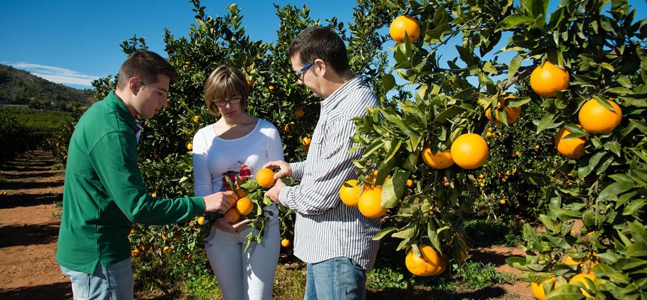 famiia naranjas marisa 2