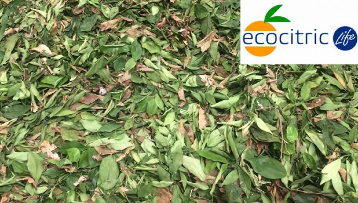 Life Eco-citric, aprovechamiento de los resíduos agrícolas