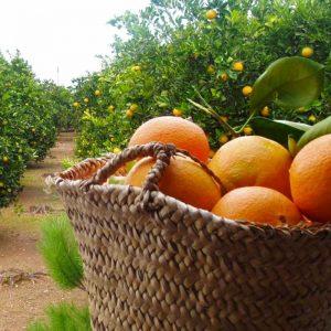Las diferentes variedades de naranja.