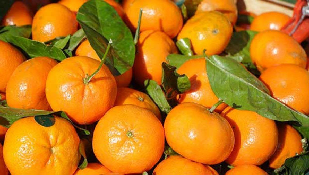 Cómo mantener frescas y jugosas las clementinas