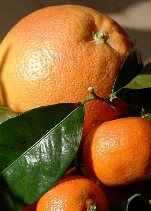 Caja mixta naranjas-clementinas 5kg.