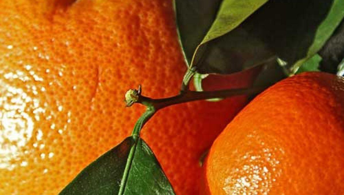 Caja mixta naranjas zumo-clementinas 15kg. AGOTADO