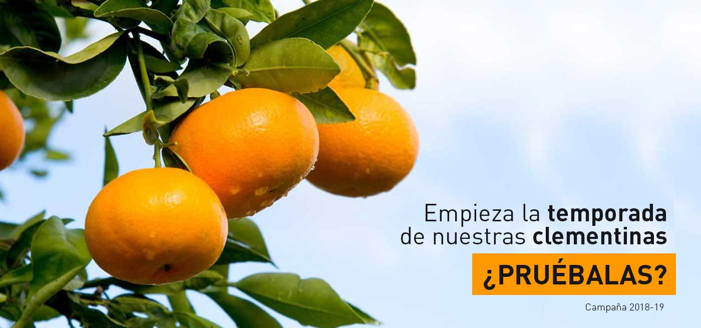 NUESTRAS-clementinas-naranjas-marisa-18-19