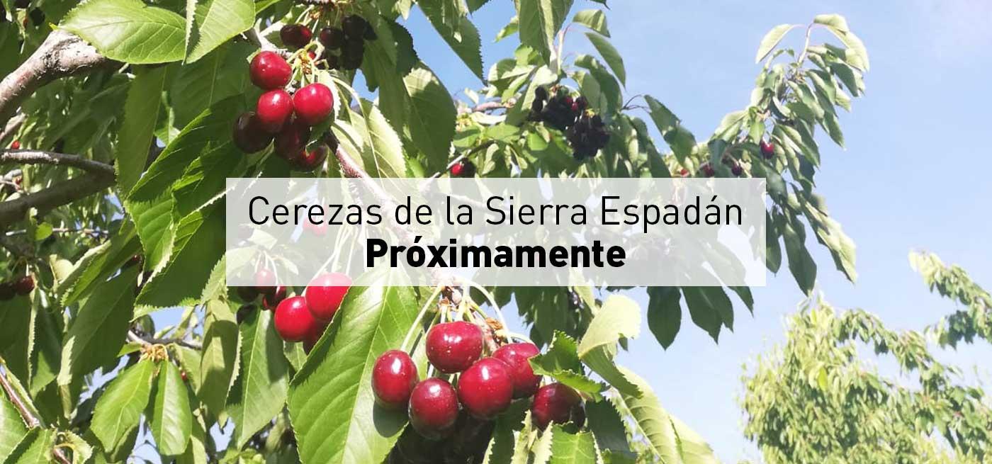 banner-web-cerezas-sierra-eapadan-1