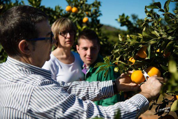 10 razones por las que comprar naranjas online