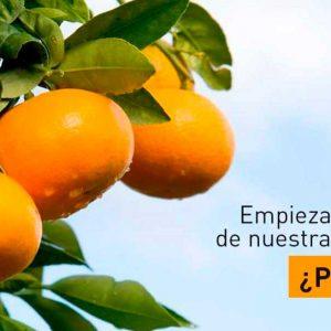 Comienza la temporada de nuestras clementinas nuleras