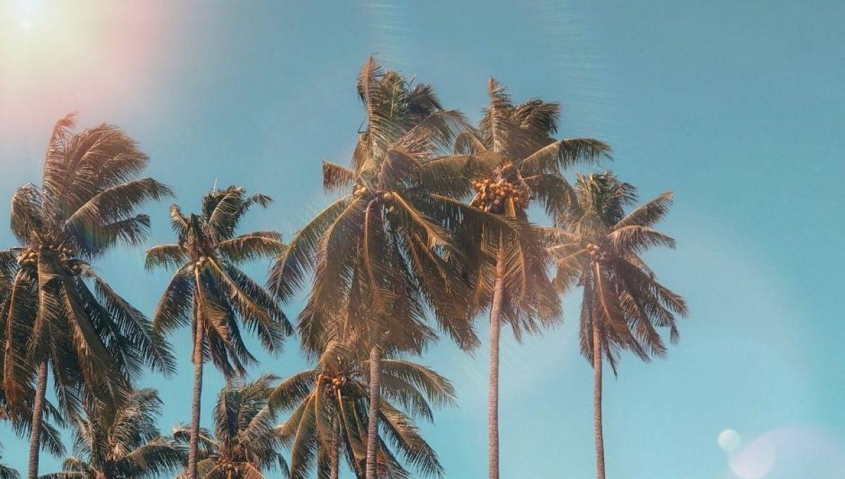 dia soleado palmeras verano - naranjas de valencia